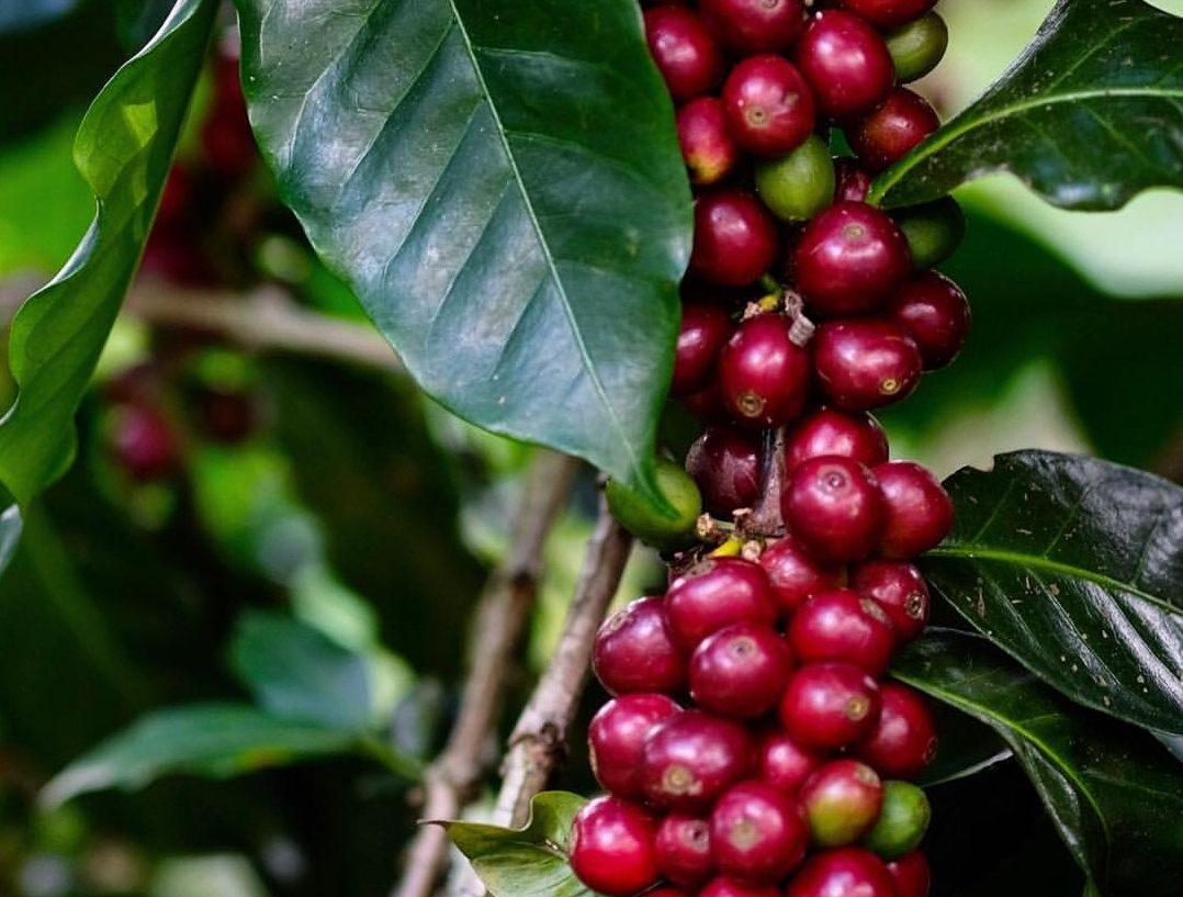 Кофе натуральной обработки