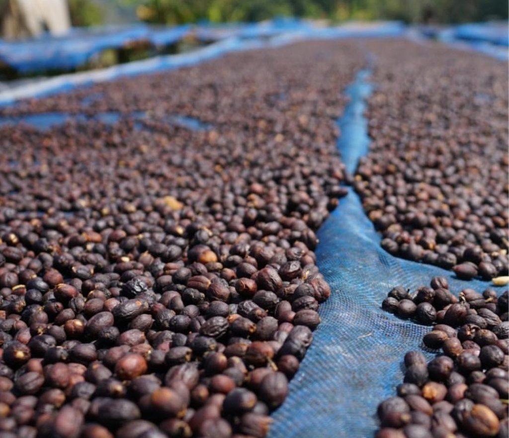 кофе сухой обработки, кофе натуральной обработки