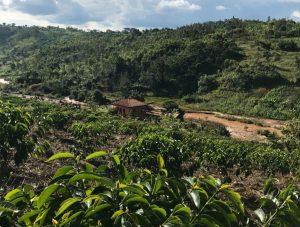 выращивание кофе, методы обработки кофе