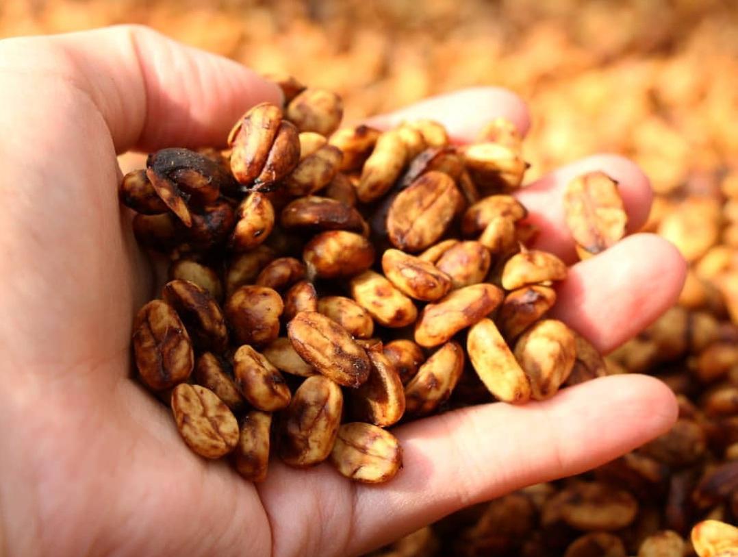 Полумытая (медовая) обработка кофе