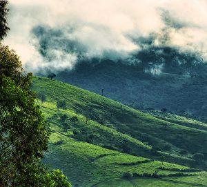 выращивание кофе, зеленый кофе, высокогорный кофе, кофейные ягоды