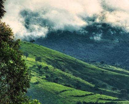 Почему важна высота произрастания кофе?